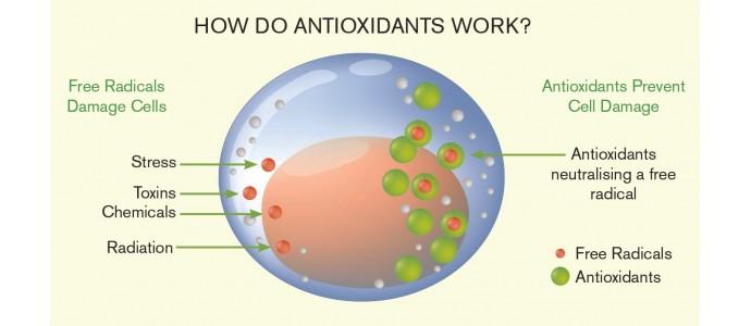 AVM antioksidansi - detoksikanti